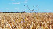 Rolnicy mogą liczyć na pomoc