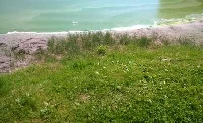 UWAGA! Plaża miejska i grunwaldzka zamknięte z powodu zakwitu sinic!