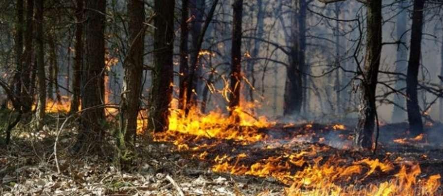 Istnieje niebezpieczeństwo pożarów lasów. Mieszkańcy powinni zachować szczególne bezpieczeństwo