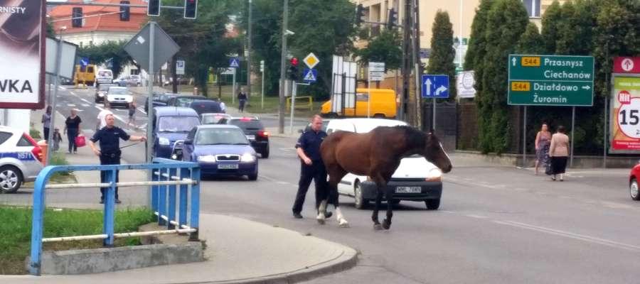 Policjanci próbowali zatrzymać konia przy dworcu