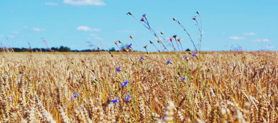 Wnioski z działania Premie dla młodych rolników można składać od 20 sierpnia do 2 września 2015 r.