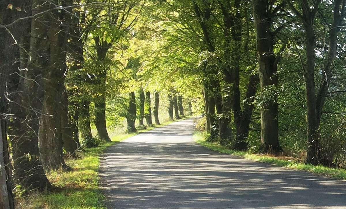 Aleja drzew przy drodze Dywity - Brąswałd