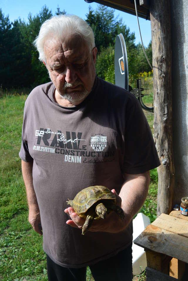 Znalazł greckiego żółwia w środku lasu - full image