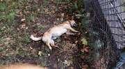 Zabił psa sąsiadki, bo drażniła go jego obecność