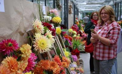 Piękne kwiaty na IV Olsztyńskiej Wystawie Dalii