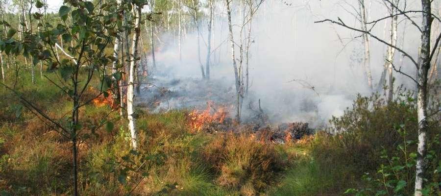 Znów płonie Torfowisko Karaska w Nadleśnictwie Myszyniec. Straż walczy z żywiołem z ziemi i powietrza