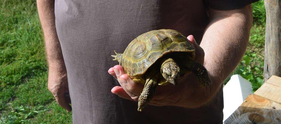 Znalazł greckiego żółwia w środku lasu