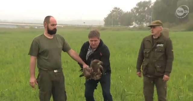 Bielik uratowany z błotnistej mazi w Świnoujściu już na wolności - full image