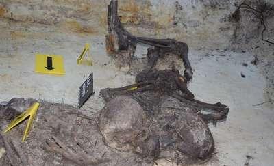 Odnaleziono szczątki ofiar sowieckiego terroru w lesie pod Ostrołęką