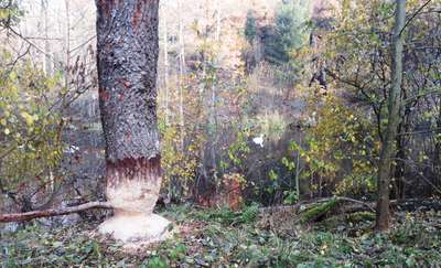 Rowerowa obwodnica Olsztyna (9) Michelin (Olsztyn) - Klebark - Silice - Pajtuny - Klewki - jezioro Skanda