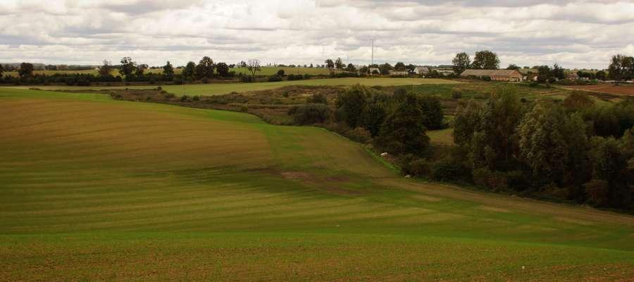 W warunkach coraz częściej występującej na Warmii i Mazurach oraz północnym Mazowszu suszy rolniczej, dobrym uzupełnieniem brakujących pasz mogą być przemienne użytki zielone zakładane na gruntach ornych