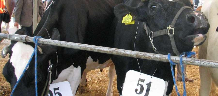 W sumie na Mazowszu kwoty mleczne przekroczyło ponad 18 tysięcy producentów, na Warmii i Mazurach zaś — ponad 4 tysiące