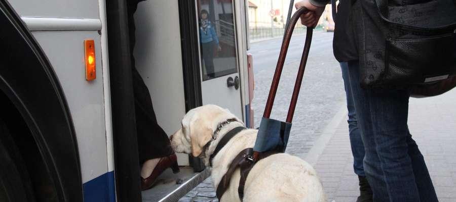 Pies przewodnik - pomocnik doskonały