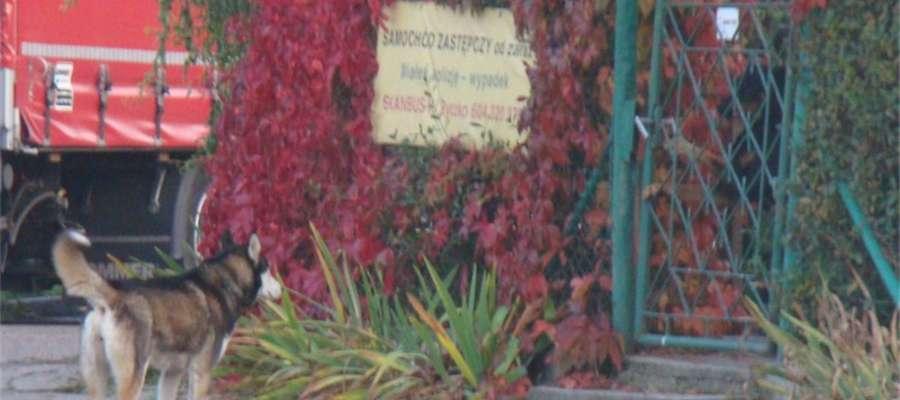 Policja przypomina obowiązki właścicieli psów