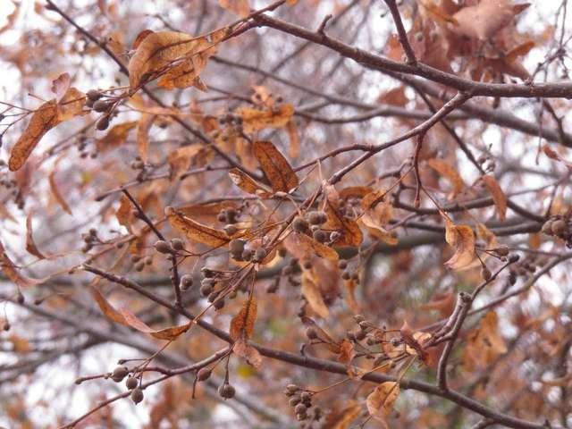 Listopad zrywa z drzew złote liście.... - full image
