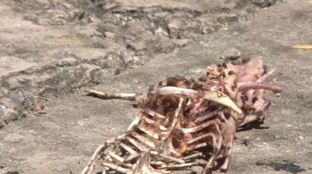 Tysiącom krokodyli hodowlanych grozi śmierć głodowa przez amerykańskie sankcje - full image