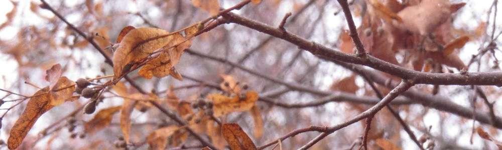 Listopad zrywa z drzew złote liście....