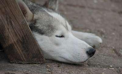 Gmina Giżycko: od stycznia nie będzie opłat za psy