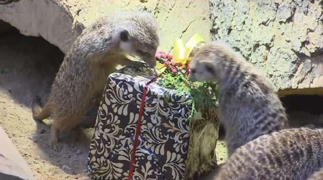 Zwierzęta z ZOO otrzymały świąteczne prezenty - full image