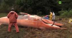 Blisko 350 płetwali wyrzuconych przez Ocean Spokojny u wybrzeży Chile