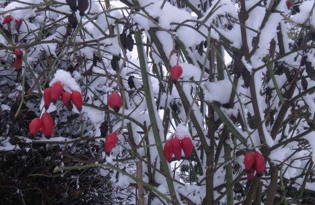 Mazury zimą - białe Mrągowo - full image