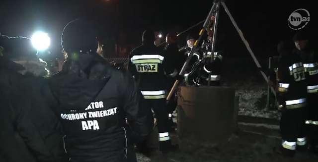 Strażacy pospieszyli na ratunek kocięciu. Wpadło do 35-metrowej studni - full image