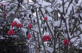 Mazury zimą - białe Mrągowo