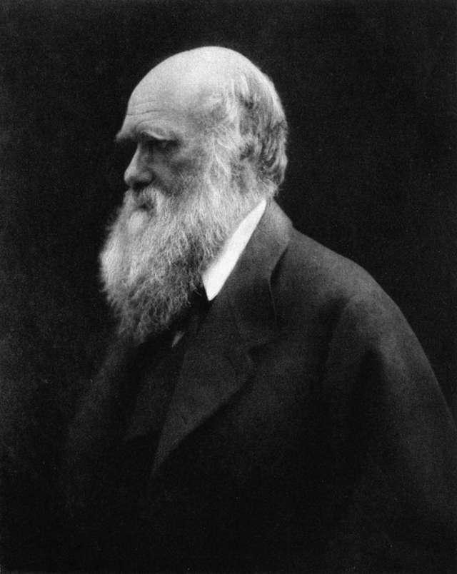 Karol Darwin na zdjęciu z roku 1868, a więc w wieku 59 lat. Zdjęcie wykonała Julia Margaret Cameron (1815-1879), jedna z pionierek fotografii   - full image