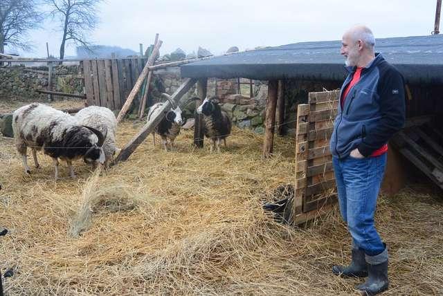 Pan Piotr i część jego stada - full image