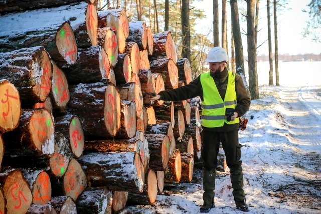 Ścięte drzewa są specjalnie znakowane - full image