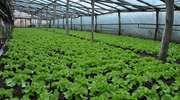 Produkcja ogrodnicza na Warmii, Mazurach i Powiślu