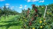 Uprawy sadownicze i jagodowe - konferencja w Ornecie
