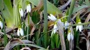 W Nowym Mieście i okolicy zapachniało nieśmiałą wiosną...