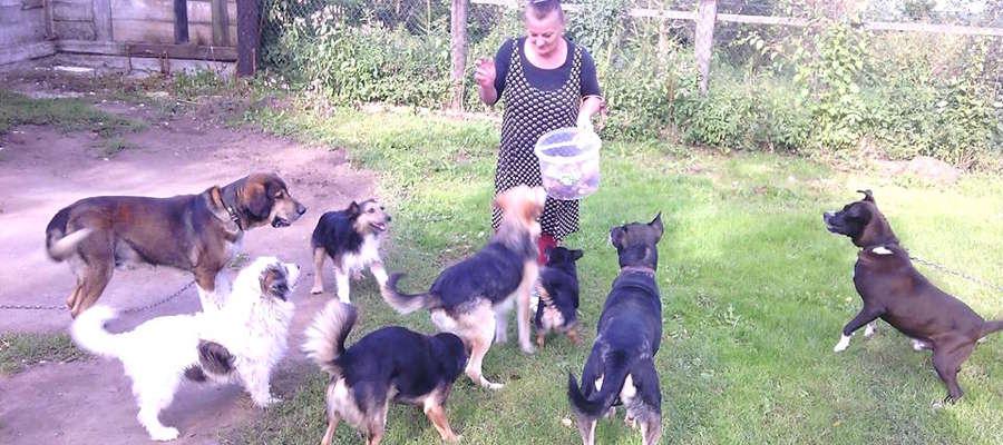 Pani Krystyna lituje się nad bezdomnymi zwierzętami, ale ma problem z karmą dla takiej gromady