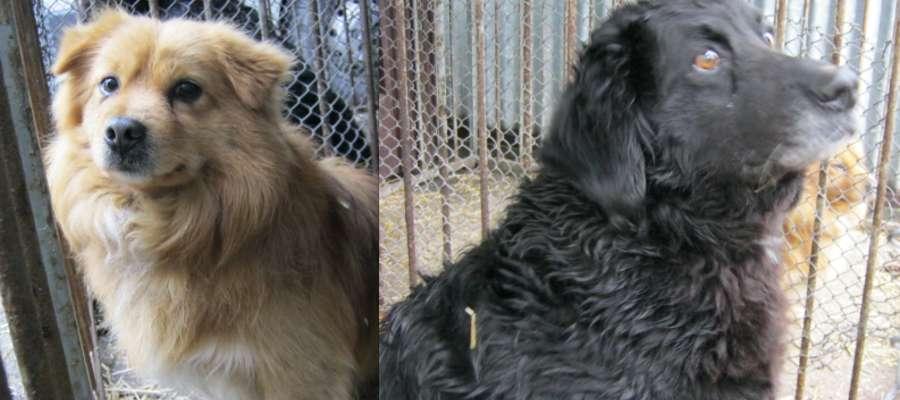 Te dwa psiaki czekają na właścicieli