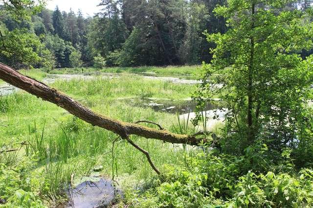 Las też ma swoje święto. Sprawdź, jak o niego zadbać - full image