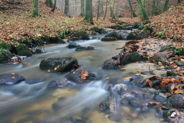 W dolinie rzeki Grabianki koło Kadyn - full image
