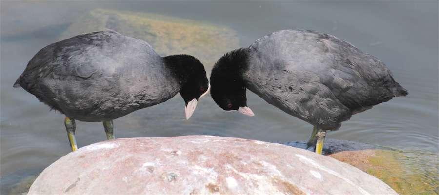 Mazurskie ptaki tematem konferencji w Spytkowie