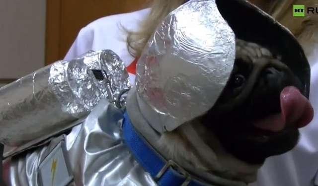 W Rosji to psy świętują Dzień Kosmonautyki - full image