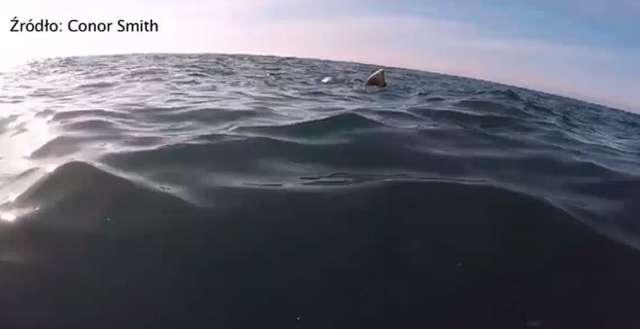 Bliskie spotkanie kajakarza z rekinem olbrzymim u wybrzeży Irlandii - full image