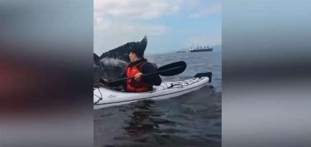 Ogon wieloryba prawie przewrócił jego kajak - full image