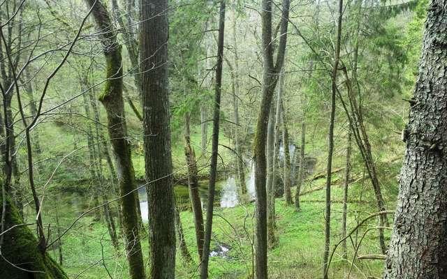 Za tymi drzewami wije się Łyna - full image