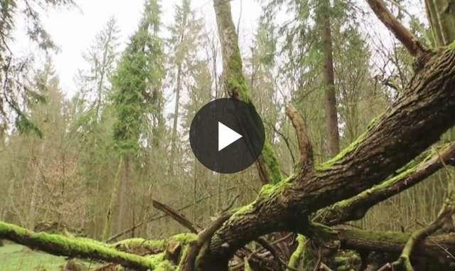 Bogactwo Puszczy Białowieskiej. Jak człowiek wpływa na rośliny i zwierzęta tam żyjące? - full image