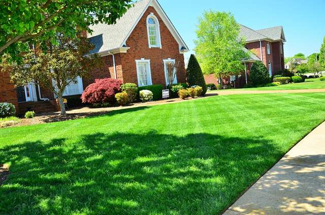 Jak dbać o trawnik - full image