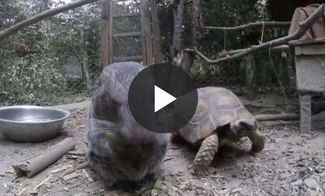 Ten żółw ma parcie na szkło - full image