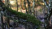 Wiosenny las pod Bratianem