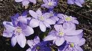 Wiosna w Mrągowie, czyli nad Czosem i na ryneczku