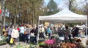 VIII Wiosenne Targi Ogrodnicze dla wszystkich pasjonatów zieleni