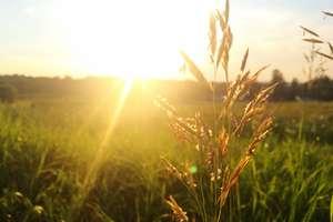 Niezbędnik alergika. Kalendarz pylenia roślin 2017