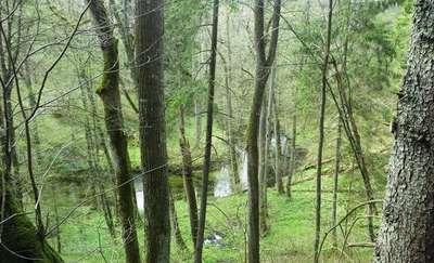 Olsztyński szlak rowerowy: Tęczowy Las - Leśniczówka Zazdrość - Zerwany most na Łynie - Ruś - Tęczowy Las